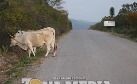 Animales sueltos en carretera libre