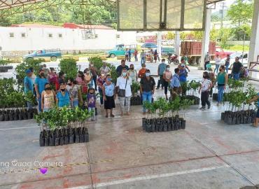 Ayuntamiento dio plantas de naranja