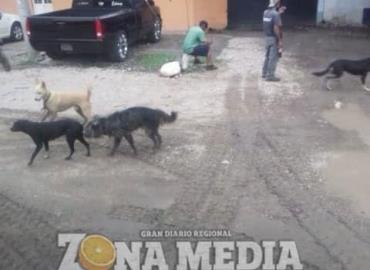 Jauría de perros en  el Crucero de Rayón