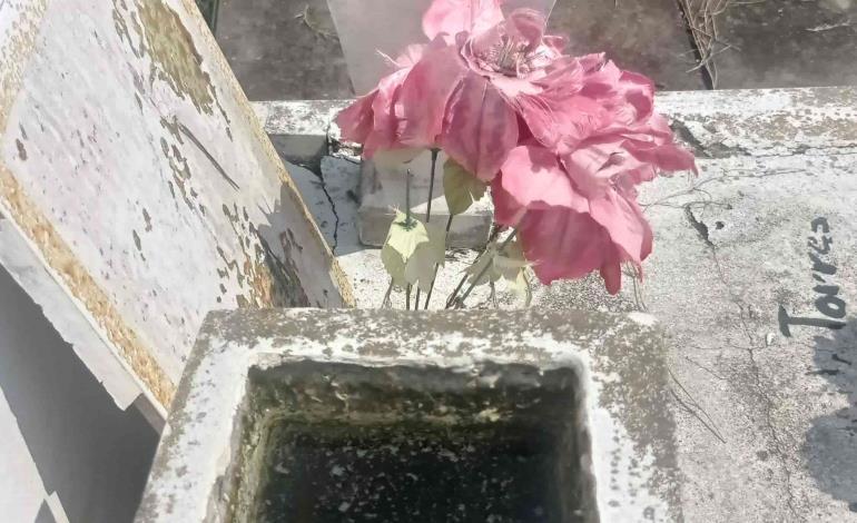 Crían zancudos en el cementerio