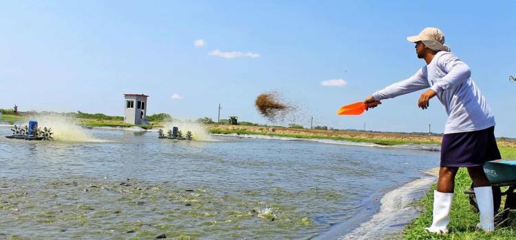 Subsidio a energía para uso acuícola