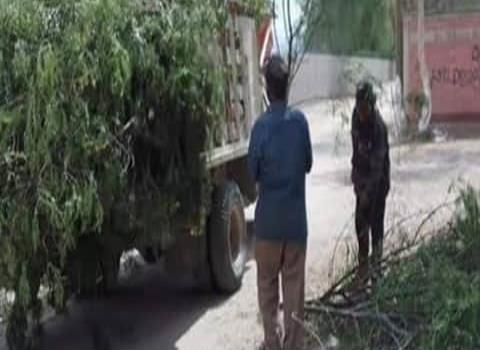 Restringida la tala de árboles