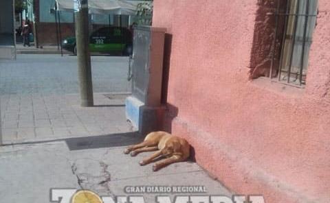 Mascotas deben tener cuidados