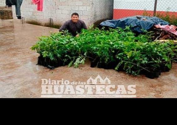 Entregan plantas de frutos y maderables
