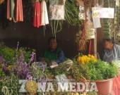 Bajó consumo de las hierbas medicinales